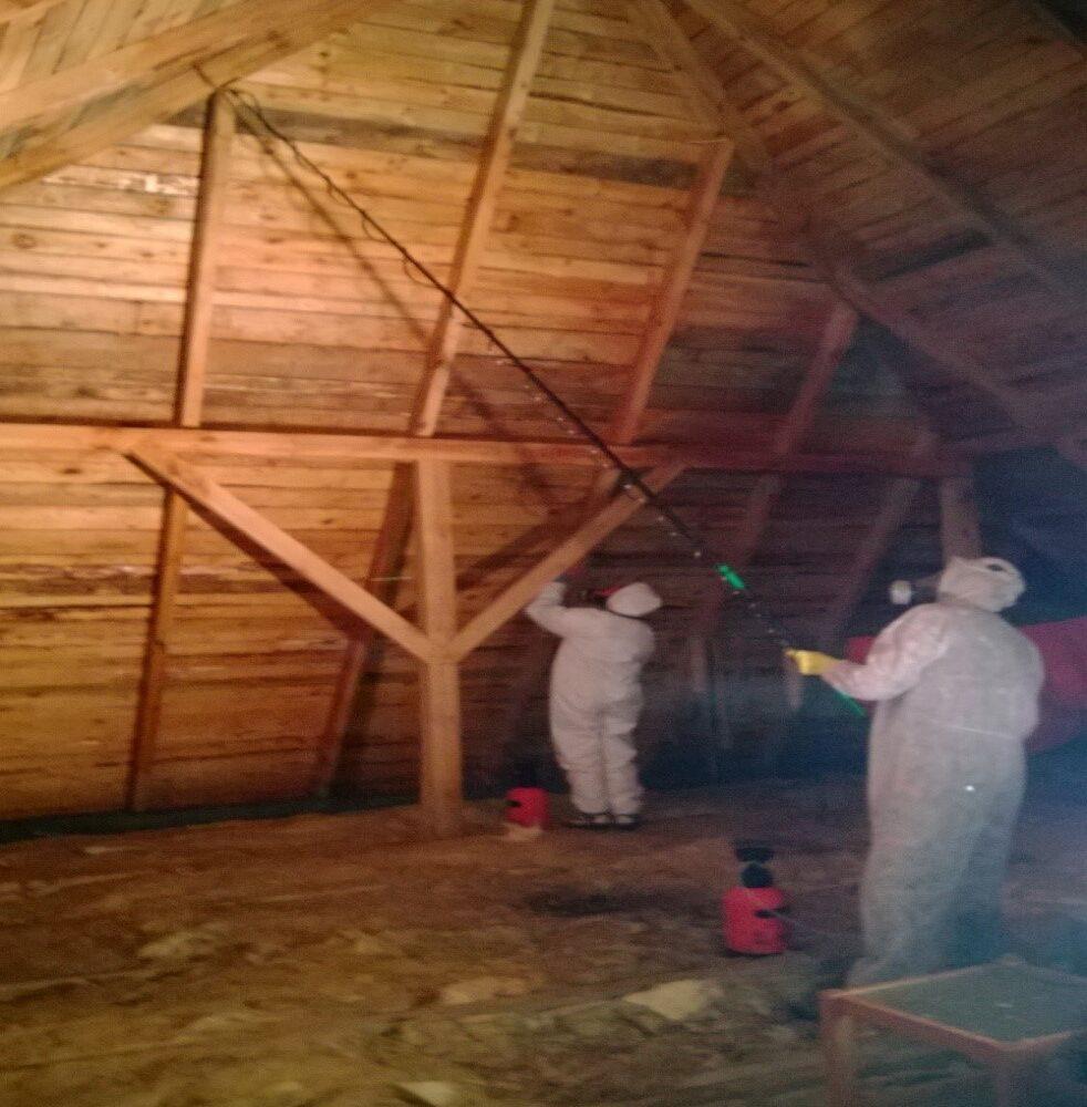 Odgrzybianie dachu w budynku
